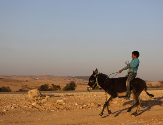 A young Bedouin boy riding a donkey in the Negev desert, Israel. Dec. 2013. Credit: Yaakov Naumi/Flash90.